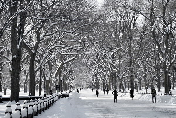"""""""Central Park Mall Winter Scene"""" 2011  The Mall in Central Park after a freshly fallen snow in classic black and white."""