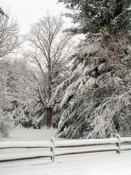 Fresh Snow Landscape