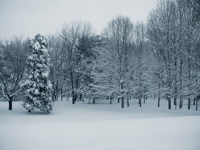 """""""Quiet Forest""""  A peaceful Winter scene after freshly fallen snow in Central, New Jersey."""