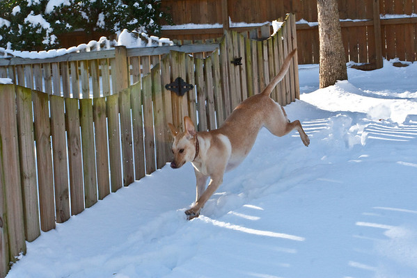 Leia jumping in the snow (1 of 1)