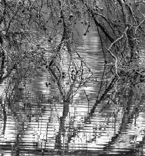 Endless Edge Black and White Mirrored