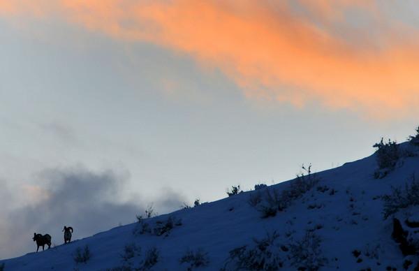 Sunset in Waterton Canyon