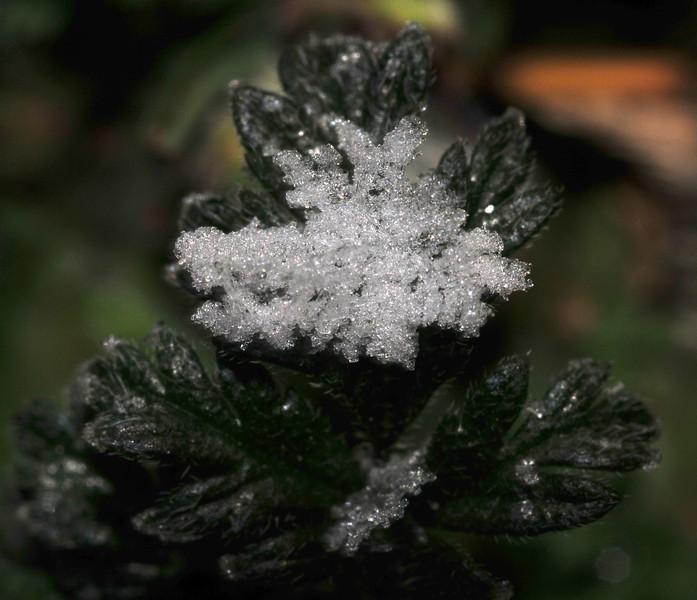 snowflake graupel