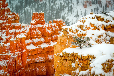 Christmas Eve in Bryce Canyon No. 2