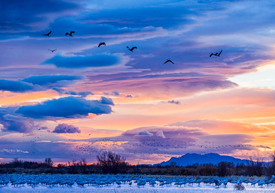 Clearing Storm and Sandhill Cranes near Bosque del Apache NM