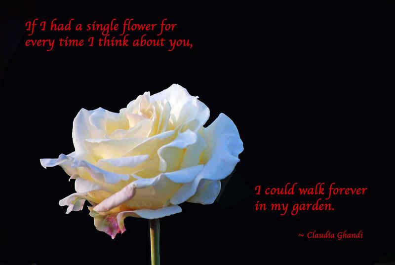 White-Rose-Valent-A flower-forever-B