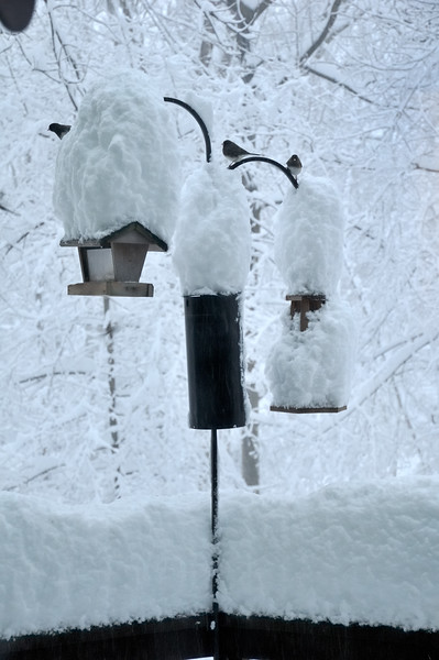 Bird feeders overwhelmed by snow
