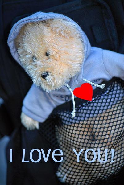 Bear-Buddy- 071-Valentine-D