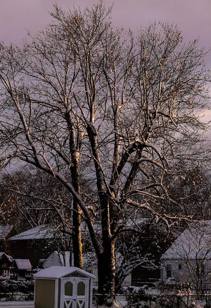 Snowstorm in Springtime