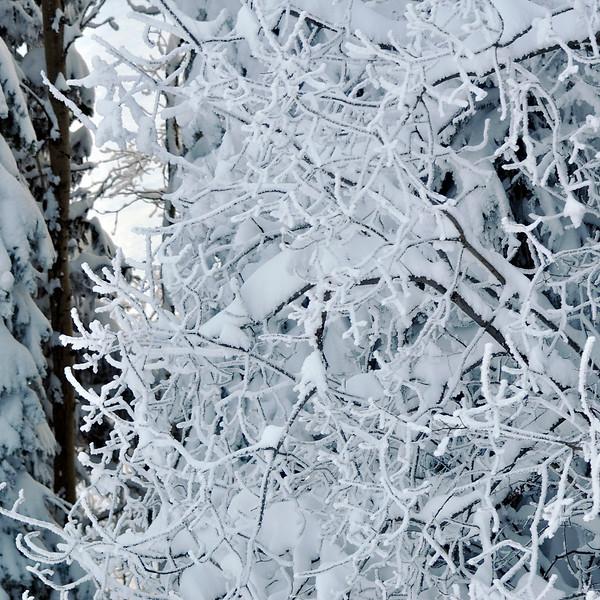 DSC_0026_Snowtree_resize