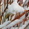 DSC_2624_SnowGrass_resize