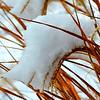 DSC_2617_Snowgrass_resize