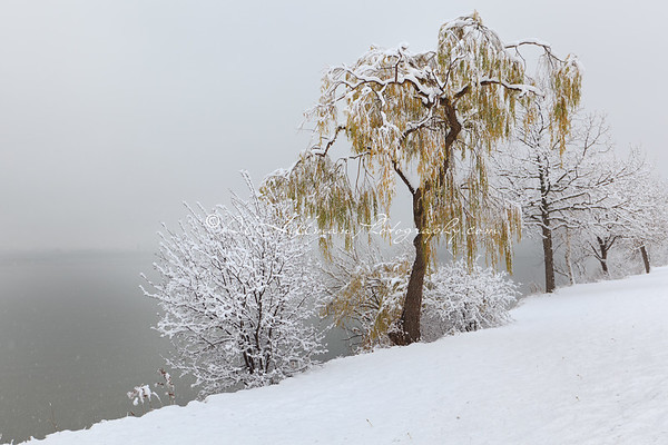 First Snow_2
