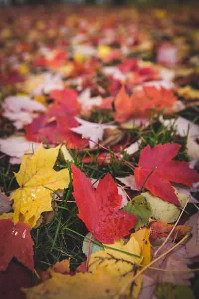 Fall foliage - Jasper County, Indiana.