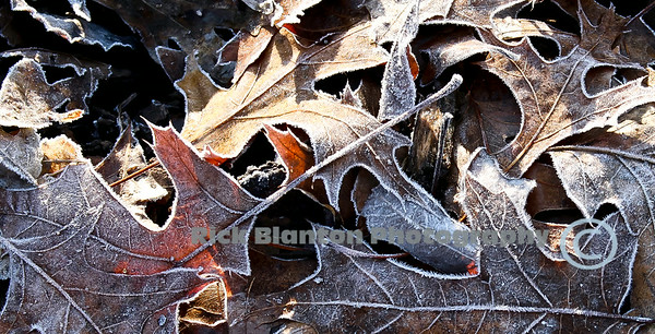 """ First Frost """