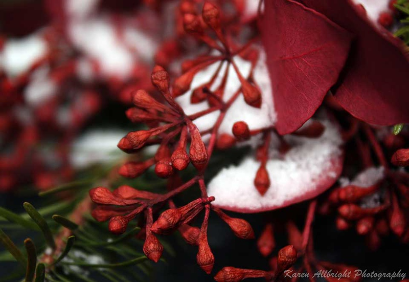 Winter 2012, Snow & Berries
