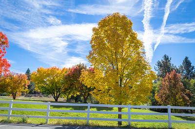 Autumn in Apple Hill: Bight Yellow