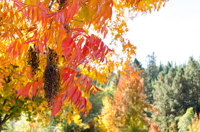 Autumn in Apple Hill: Contrasting Colors