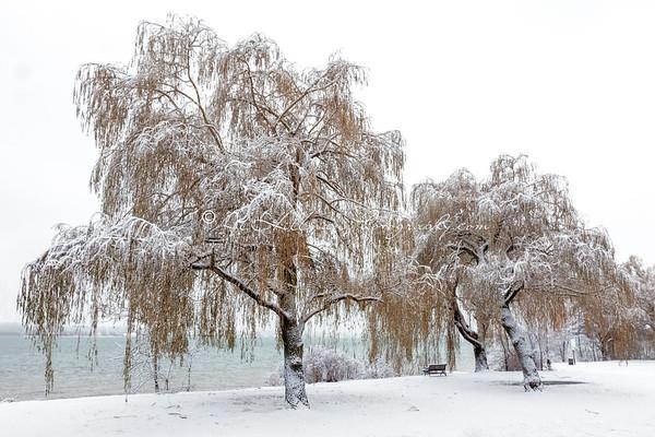 First Snow-2