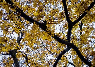 Fractals of Fall Foliage