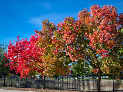 Autumn in Folsom