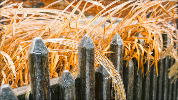 Icy-Grass_6-1-S