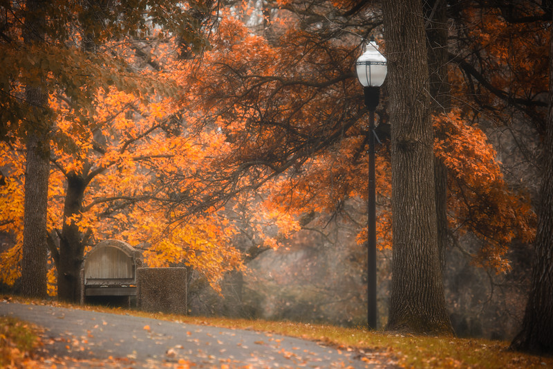 Moody Autumn Morning in the Park