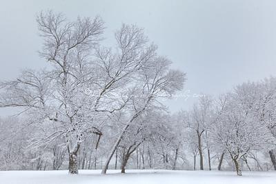 First Snow_5