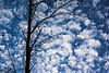 Bare tree against a cloudscape