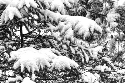 2017 A - Winter - Many shades of white and gray