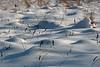 Frozen floodplain #5.