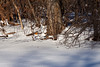 Look closely and see two robins in the snow, for crying out loud!  It was about 15º F or -9º C at the time.<br /> <br /> January 23, 2011.