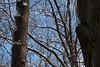 Outlined, after a light snow.<br /> <br /> December, 2010