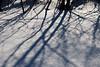 Shadows on fresh (sparkling) snow.  Furstenberg Lagoon.<br /> <br /> January 23, 2011.