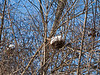 Snow eggs in birds nests.<br /> <br /> January 15, 2012