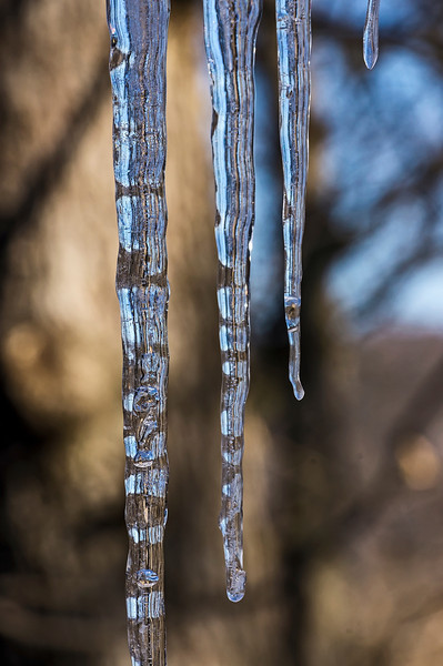 Cylindrical lenses.<br /> These thin icicles of clear ice are transmitting the highly refracted images of the tree trunks in the surrounding woods.  Those are the narrow brown and black vertical streaks you see.<br /> <br /> March 14, 2013