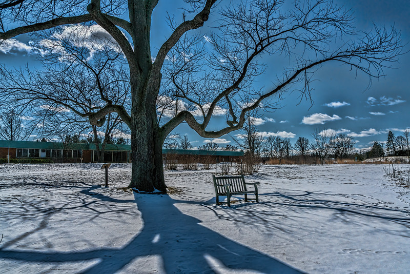 Winter shadows on the Ides of March - color version 3