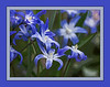 D105-2013 Silly Scilla<br /> With a layer of cutout (followed by poster edges).<br /> .<br /> Ann Arbor, Michigan<br /> April 15, 2013