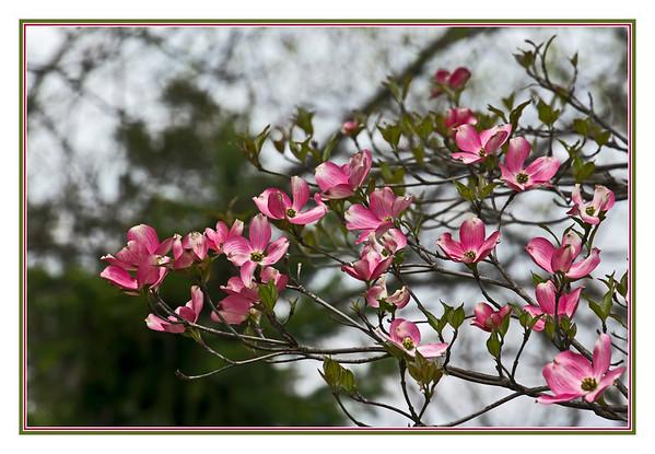 2nd - Spring