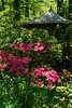 Pond Gazebo with rhododendron blooms, pink