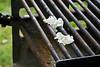 Anyone for grilled catalpa blossoms?<br /> Northern Catalpa, Catalpa speciosa<br /> Family Bignonia     Native to northeastern United States<br /> <br /> Secor Park, Toledo, Ohio<br /> May 31, 2012<br /> (nex5n)