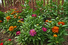 D199-2012 Zinnia bed.<br /> What would summer be without zinnias?  Less cheerful, that's for sure.<br /> .<br /> Toledo Botanical Gardens, Ohio<br /> July 18, 2012<br /> (nex5n)