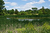 Willow pond in summer