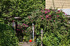 D172-2013 Garden at the corner of Onondaga Street and Geddes Avenue.<br /> .<br /> Ann Arbor, Michigan<br /> June 21, 2013 (summer solstice)