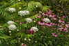 D210-2014  Mix of echinacea, Queen Anne's Lace, and sumac along Mill Creek<br /> <br /> Mill Creek Park, Dexter, Michigan<br /> July 29, 2014