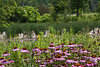 D199-2014  <br /> <br /> Matthaei Botanical Gardens, Ann Arbor, Michigan<br /> July 18, 2014