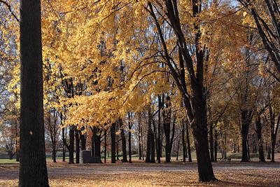 2008 D - Impressions of Autumn