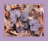 Fading out.<br /> <br /> The last day of November, still autumn by the calendar, but foliage colors are all more muted, though no less lovely.<br /> Heuchera (possibly the variety 'Silver Scrolls')<br /> (Autumn Joy gallery)