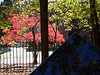 Looking past the highly recognizable Jinkerson monument toward Geddes Road.<br /> <br /> Fall foliage in Forest Hill Cemetery, Ann Arbor, Michigan.
