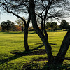 Morning shadows on the golf course